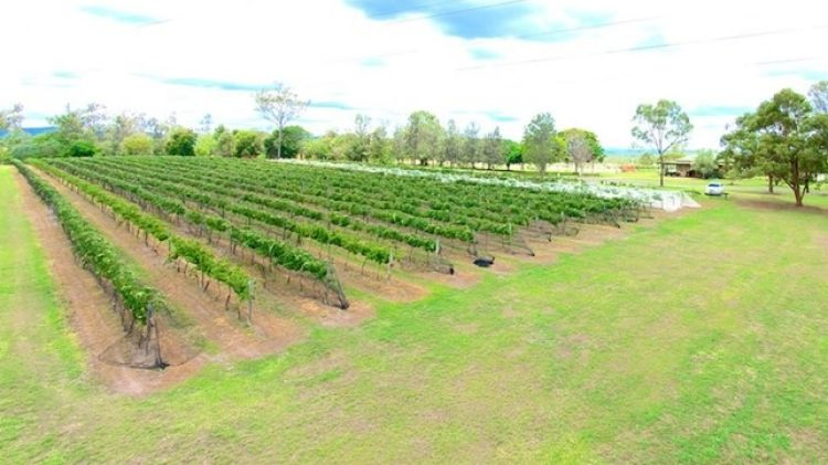 Agribusiness attracts Qld tourist property group